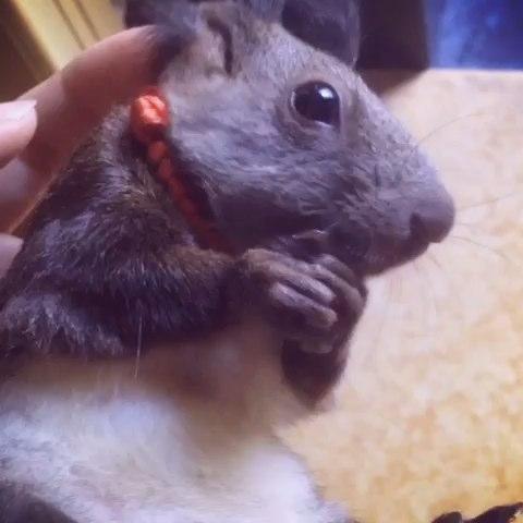 松鼠是几级保护动物