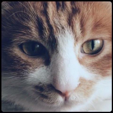 凯猫简笔画
