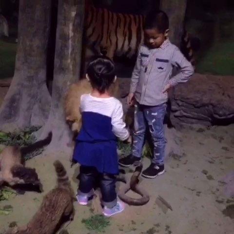 小朋友和动物近距离接触