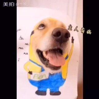 #本本儿视频合集##本本儿生日快乐#我叫本本儿,今天我六岁辣,我的生日愿望是:希望全天下的猫猫狗狗都能有一个永远爱它的主人❤❤~~